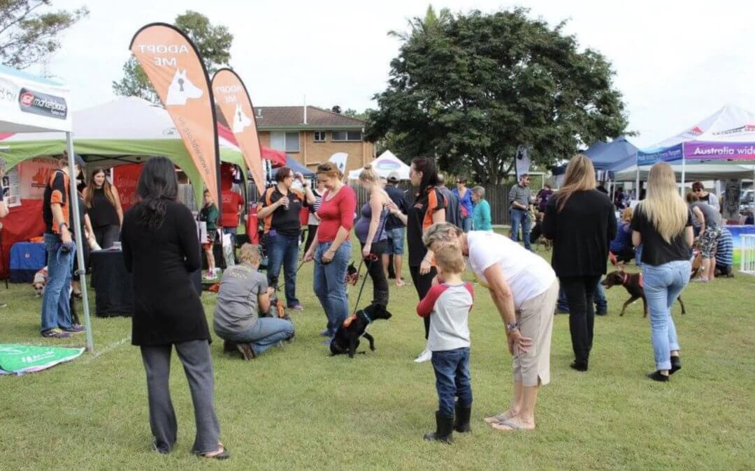 Blue Paw Pet Adoption Day raise more than 2K for rescue groups
