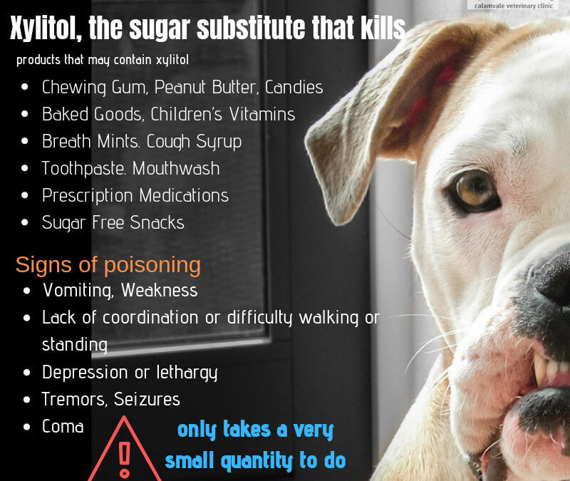 Xylitol, the sugar substitute that kills