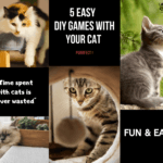 Photo collage of Cats