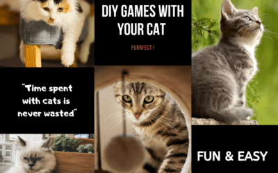 Is Your Cat Bored? Try These Fun DIY Games!