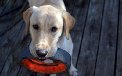 10 Fun and Easy Games with Your Dog